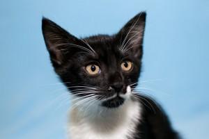 Кот и кошка,возраст 2 месяца - DSC_0019-2.JPG