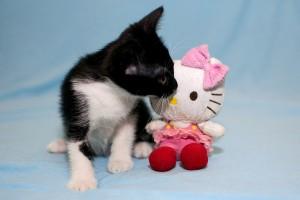 Кот и кошка,возраст 2 месяца - DSC_0015-2.JPG